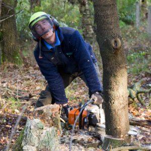 Boomverzorger Dave kapt deskundig een boom