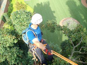 Boomverzorger hoog in de boom