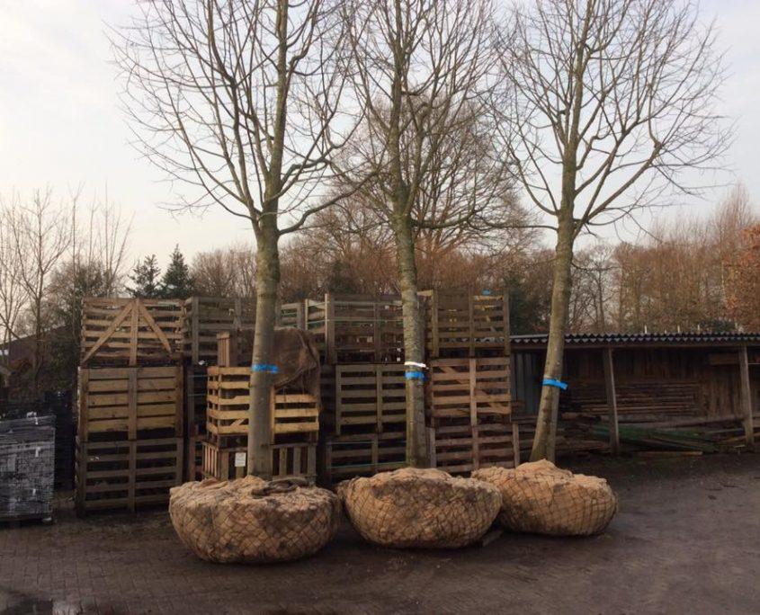 Bomen aanplanten